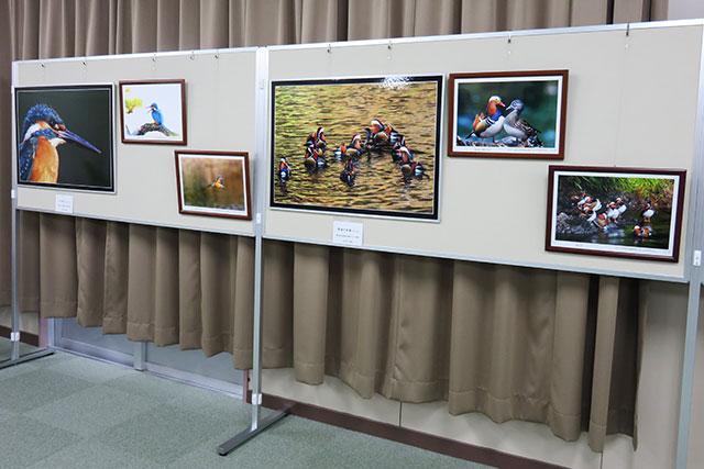 2017-ひな人形展と地域文化展-7