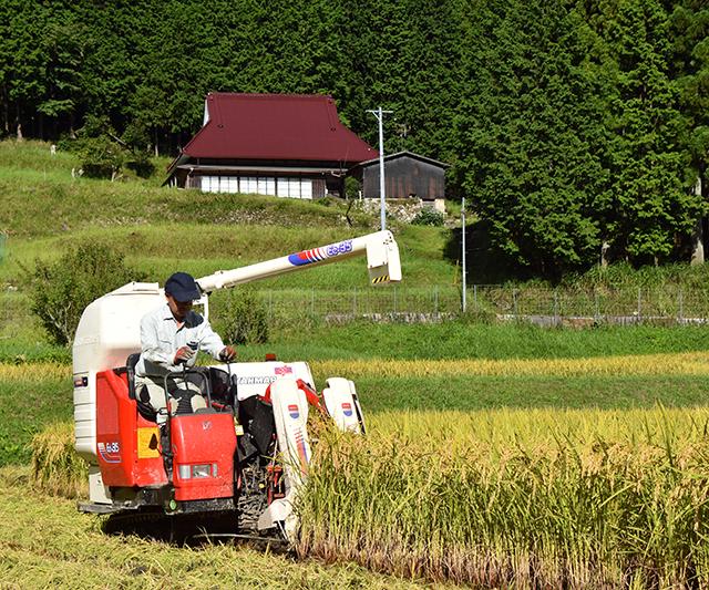 「ふるさと米ミネアサヒ収穫!」伊藤 由美