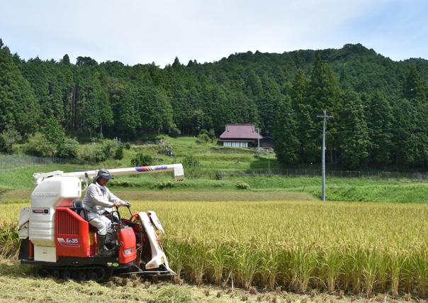 「猛暑の稲刈り」荻野 美奈子