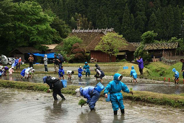 「田植え祭り」神谷 忍